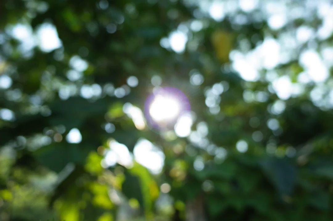 木漏れ日 (sunlight passed through leaves