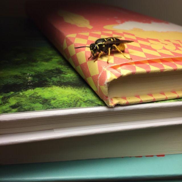 正在尝试和蜜蜂和谐相处。。没错就是被植物引来的orz