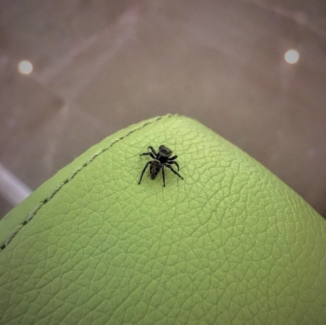 This is Spider Peter