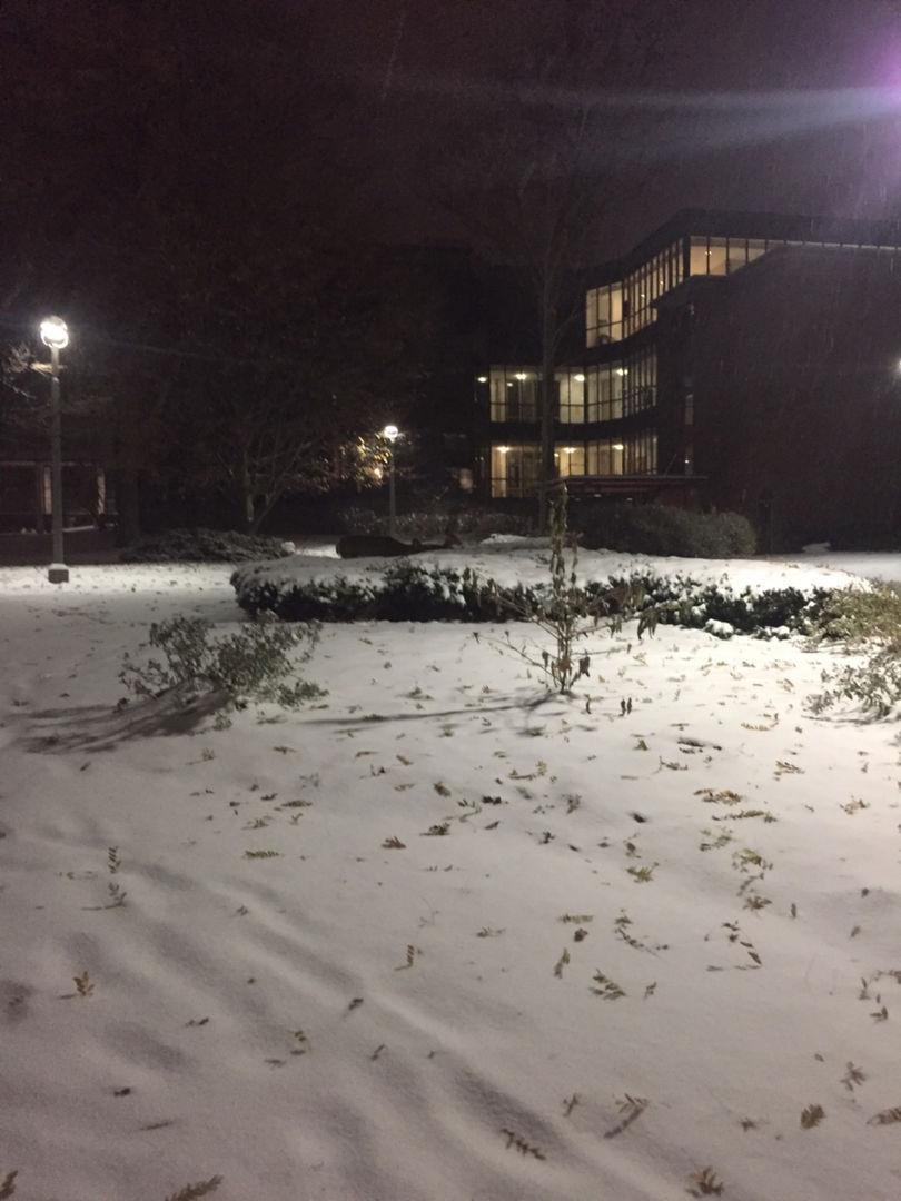 看到鹿的那天下了超厚的雪