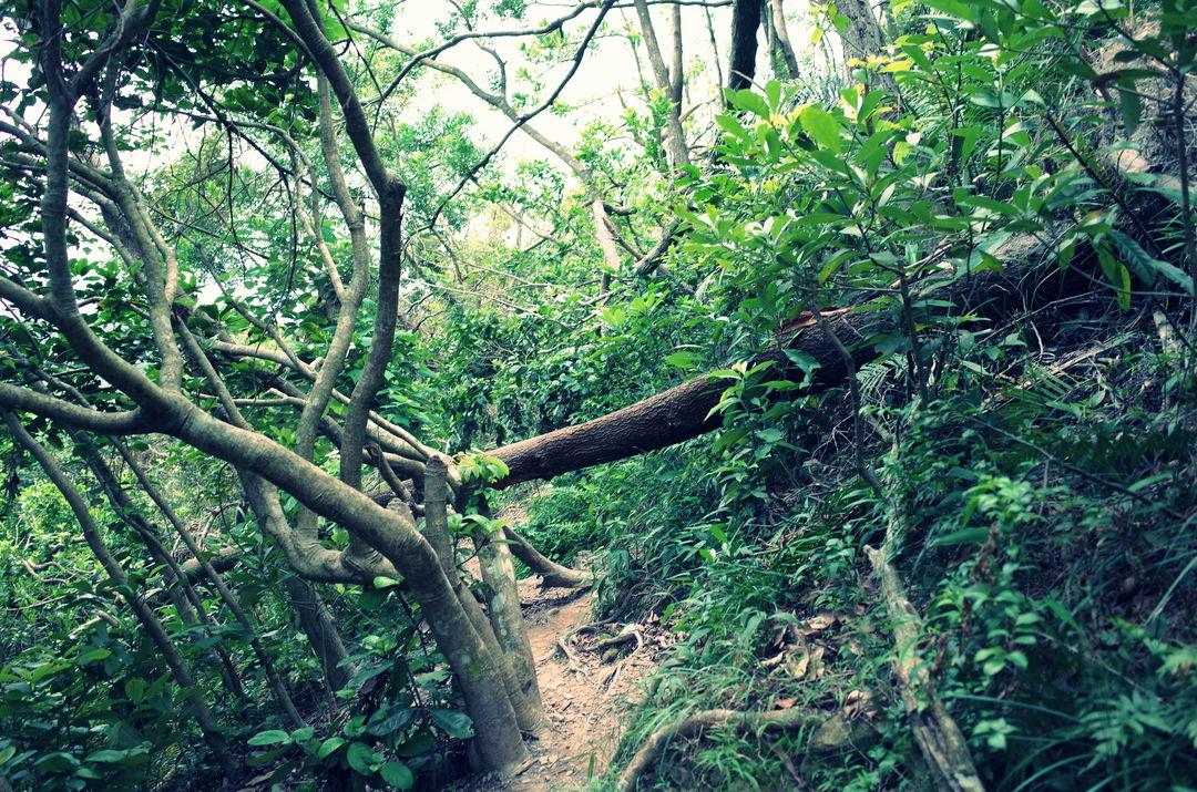 悠长假期最后一天,又去后院爬了一趟山,天气不佳,但也有别样景色。 #绿篇