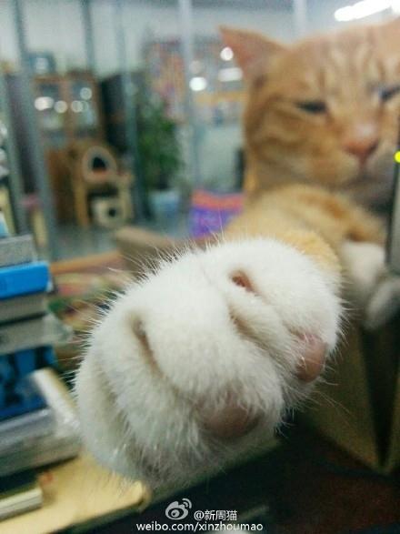 猫爪好萌……然...