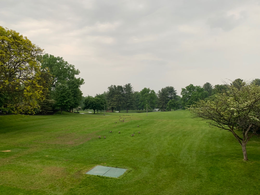 下雨天看到草坪上一群出来溜达的鸭子互相打闹233