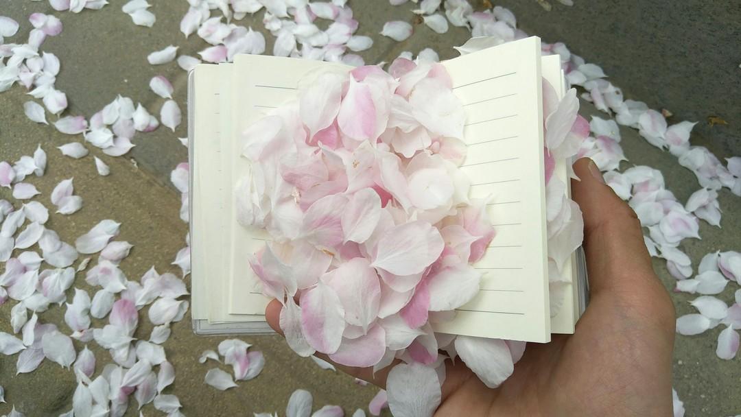 那是一场... 花瓣落雨般的舞蹈——