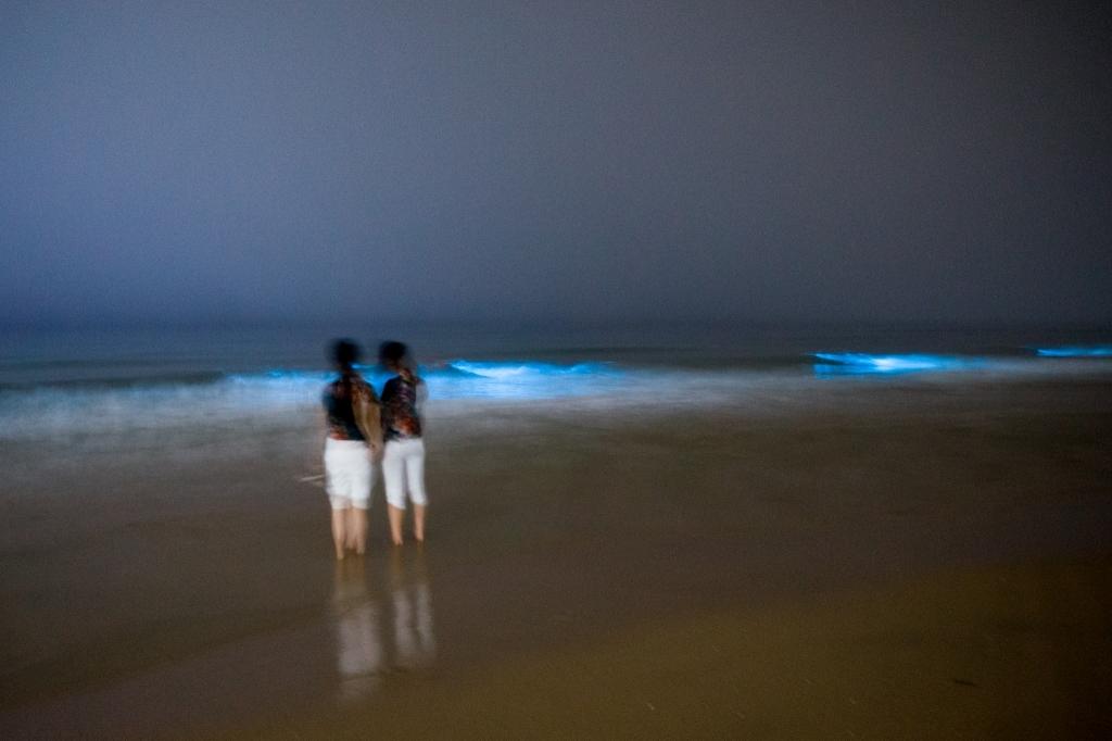 四月的夜晚,荧光的海