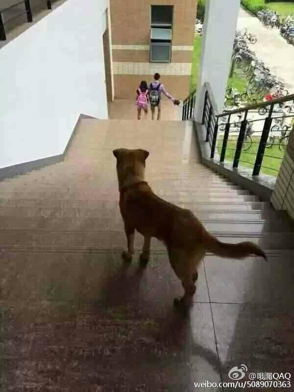 单身狗也是狗,可以不爱但请不要伤害