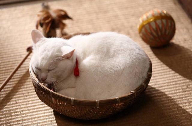 这样猫可以睡得着吗?