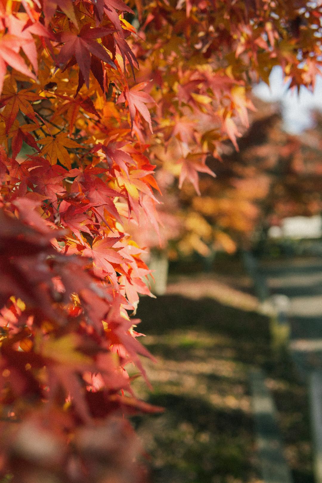 秋天結束了