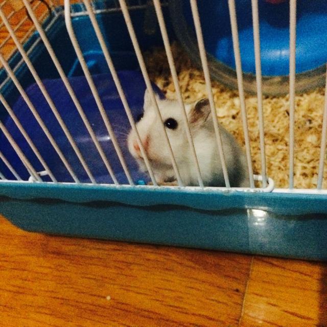 分享猪排饭⬅️仓鼠的名字