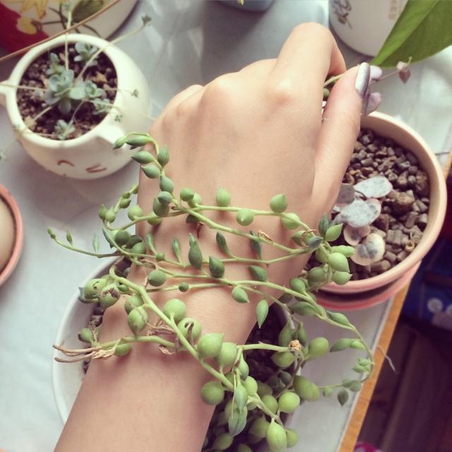 纯天然植物手链😉