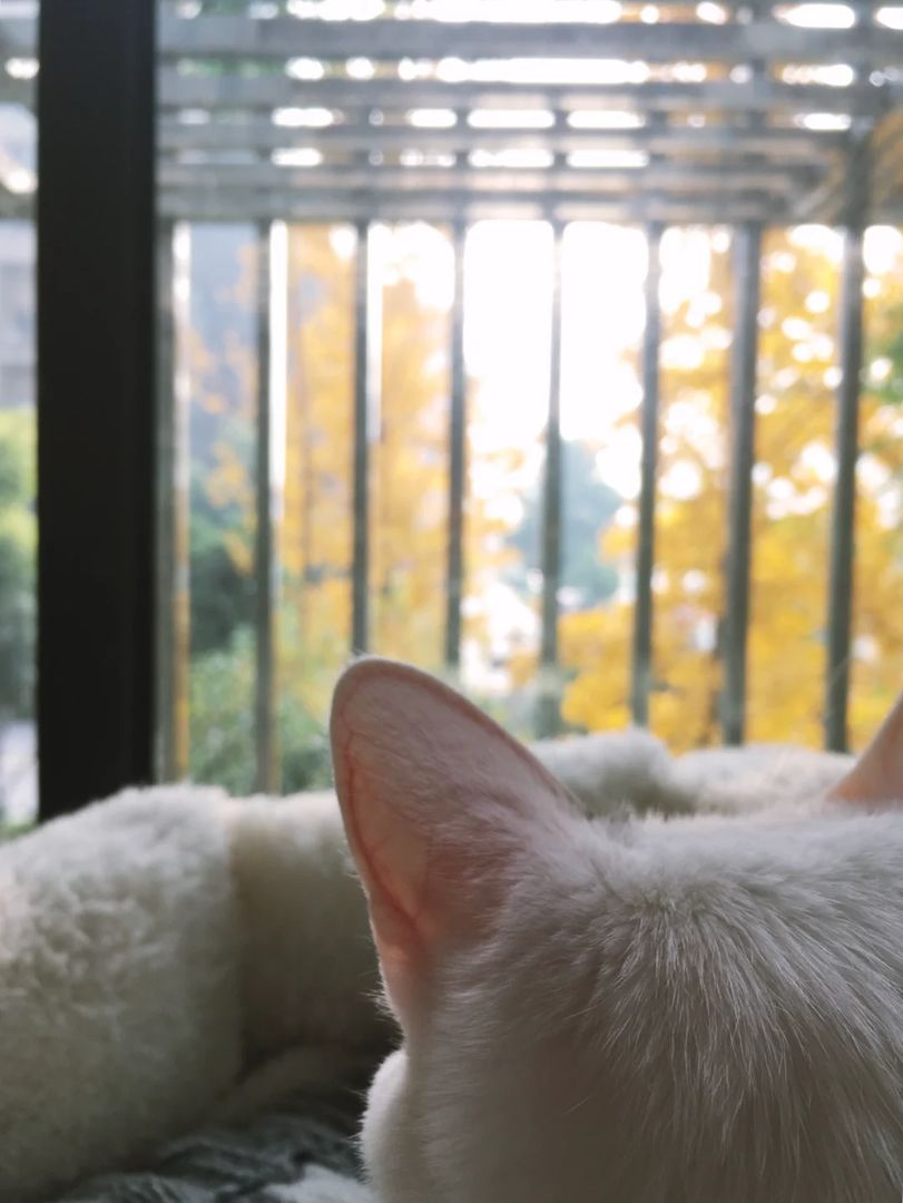 可爱的耳朵