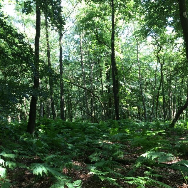 在全荷最古老的森林公园里徒步(6小时约20公里)