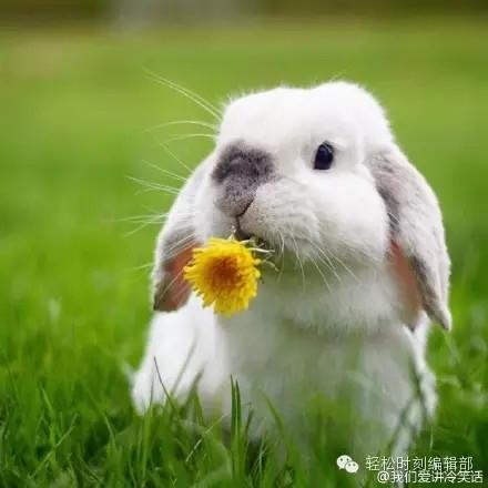 大家萌才是真的萌,垂耳兔才是最萌的!