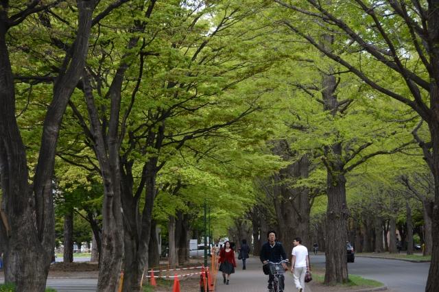20150509 北海道大-樱