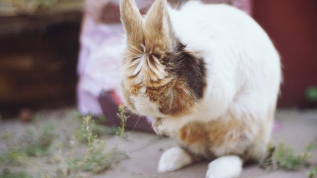 旅兔III