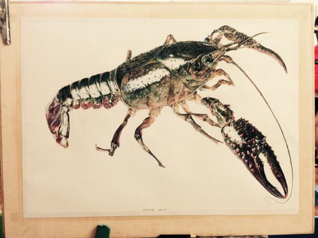 終於 能上喵飯 啊不 終於畫完這隻蝦