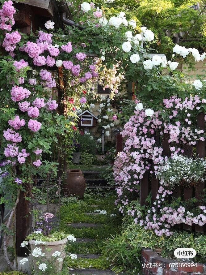 想住在这样的花园里!想当小鱼干。不想太累了😣