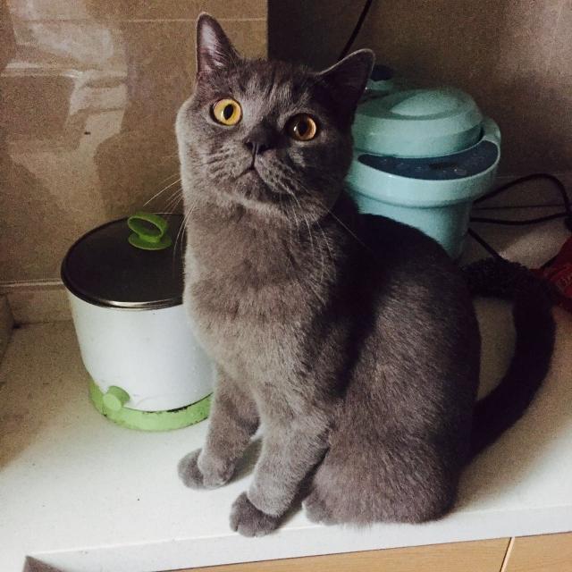 朋友寄养的猫