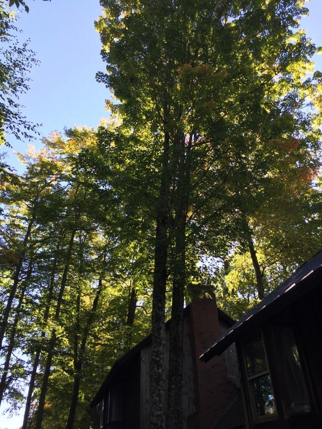 宿舍旁的风景