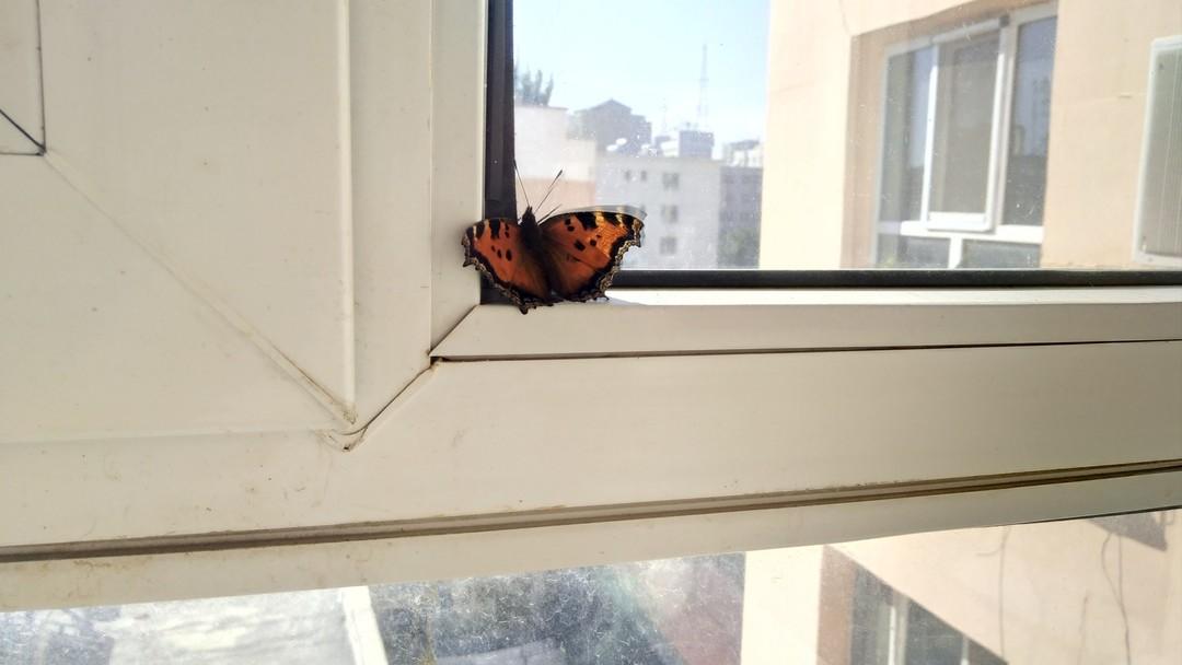 家里飞进一只蝴蝶,给它洒了点水喝!... = ﹃ =