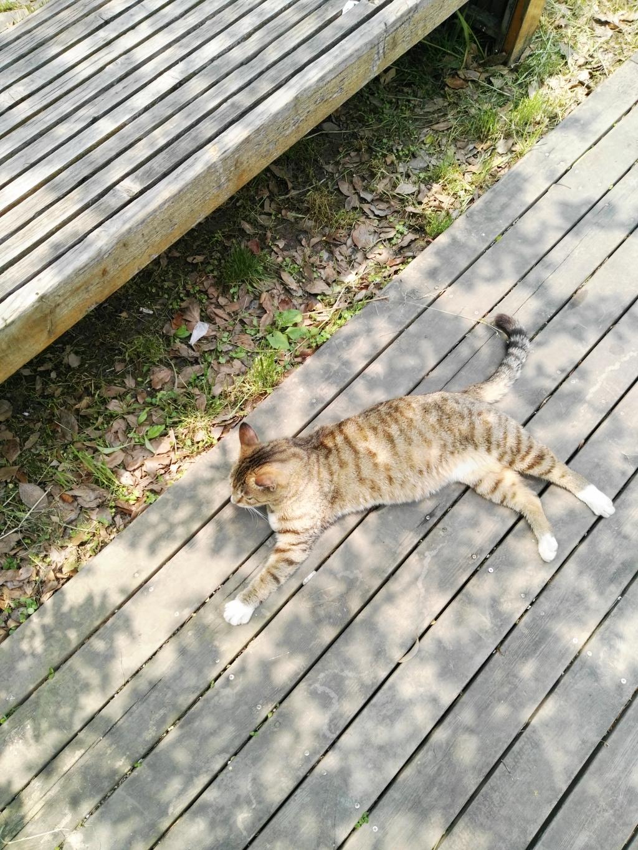 既然叫catfan,那就传张cat的图