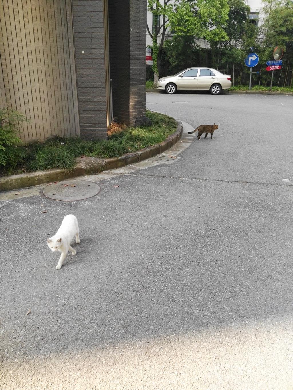 Cat:道不同,不相为谋