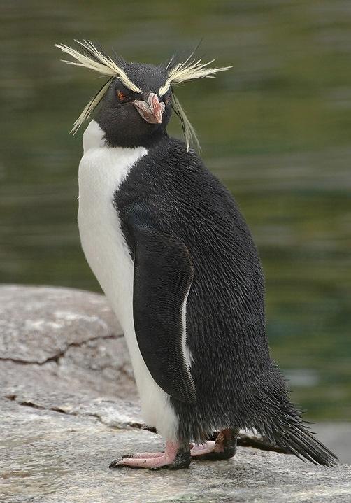 我在南方的艳阳里热浪涛涛,你在北方的寒夜里冻成企鹅。