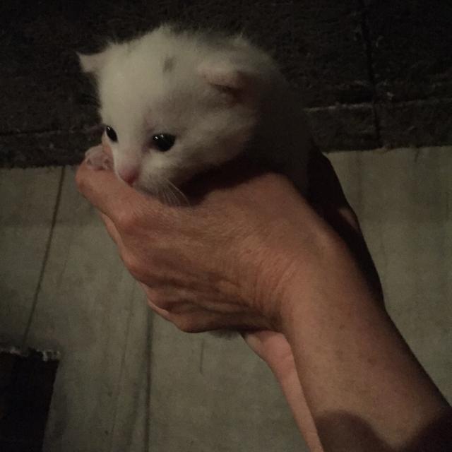 老天赐我一只小猫咪吧