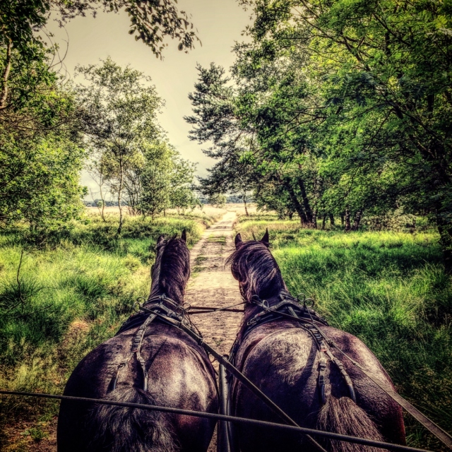 农场给牛喂樱桃,坐马车行在森林小道上,惬意的农村生活~