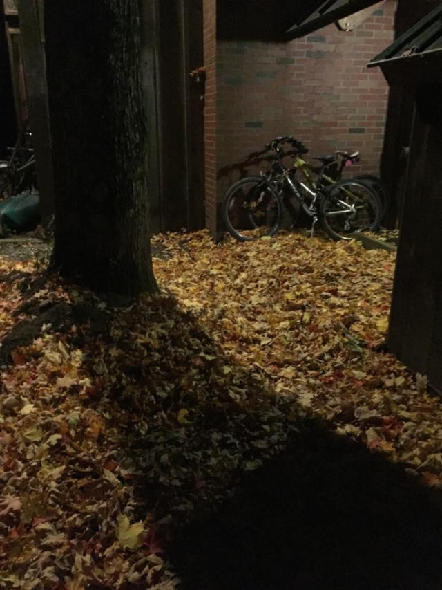 才一个星期没回去叶子就都掉光了