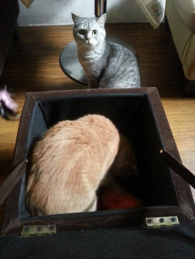 家对面居然就有间misscat,简直摸个过瘾ヾ(*´▽'*)ノ