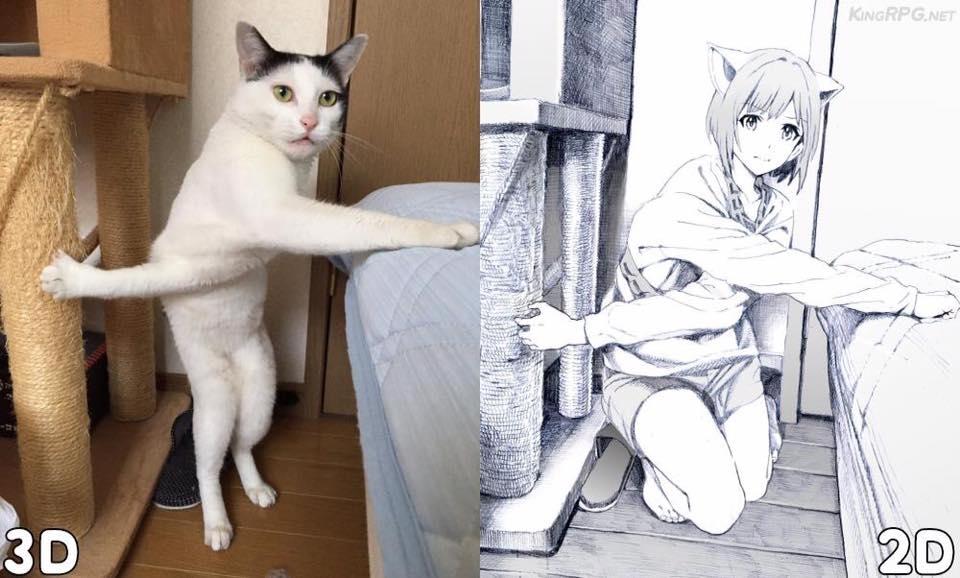 2D與3D 貓咪www