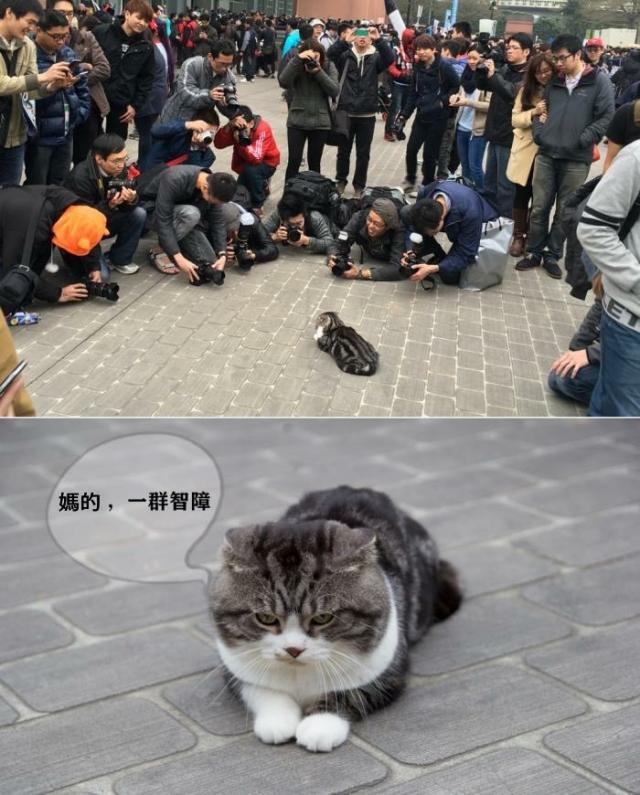 當大家在圍觀一隻貓時 你有想過他的感受嗎 (?