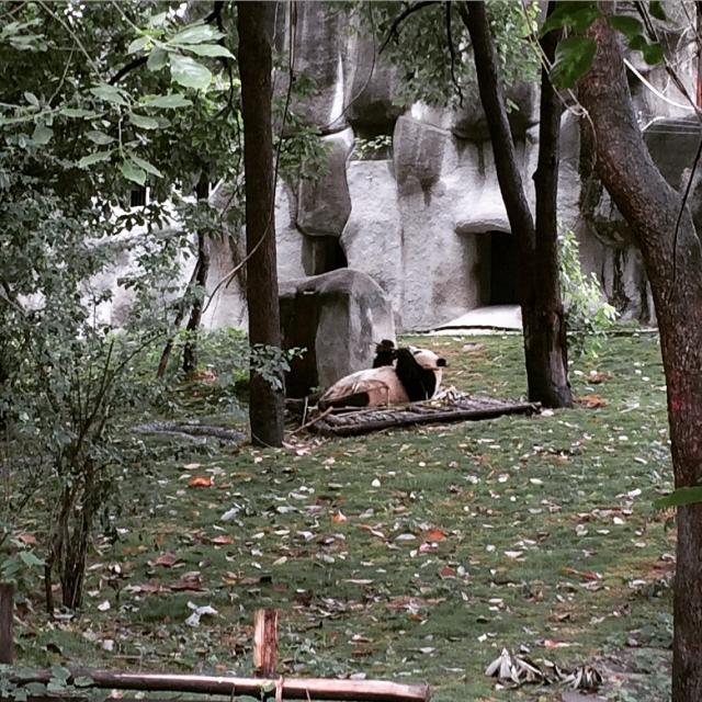 相比之下大熊猫都是抠脚汉子