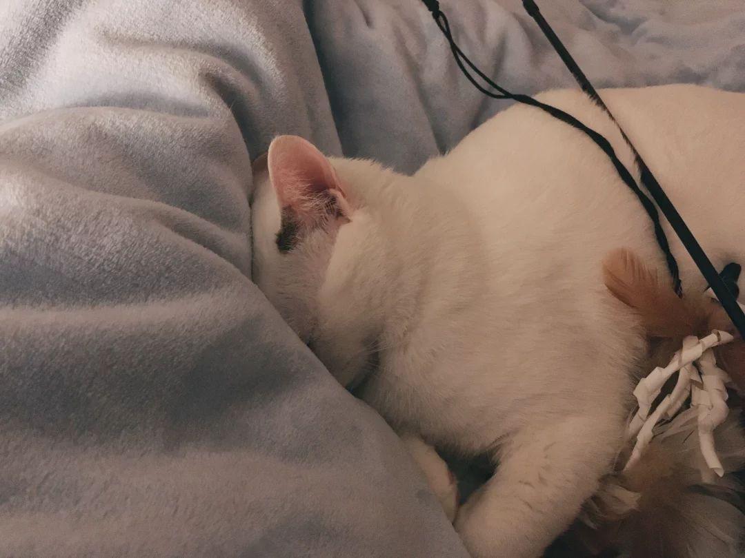 好可爱的睡姿